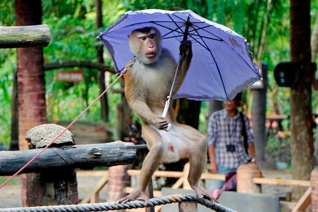 ...ob mit Schirm, ganz alleine oder auf dem Seil, lustig...