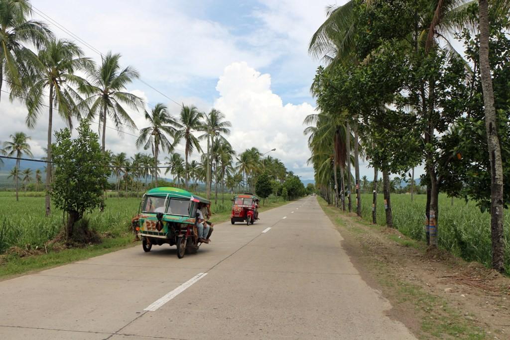 ...auf der National Road, links und rechts Zuckerrohr Plantagen