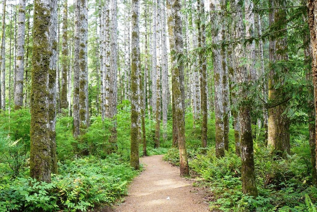 Boreale Wälder links und rechts des Pacific Rim HWY´s