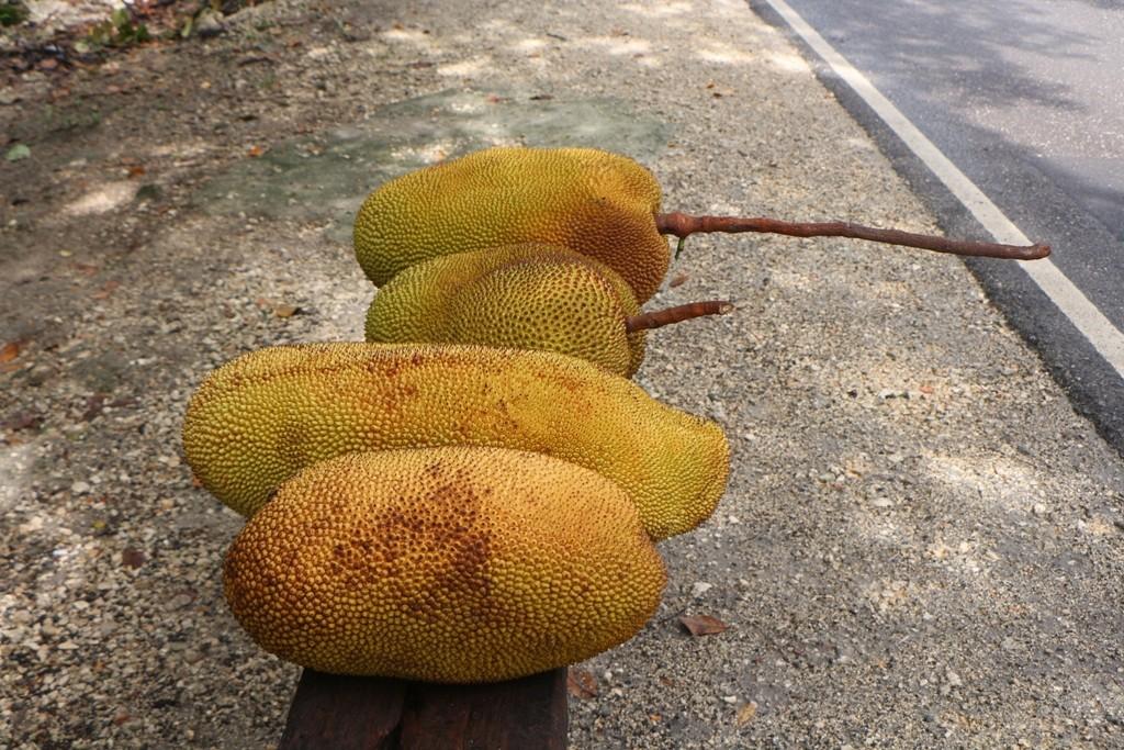 Imposant sind die Früchte allemal, ergo, die Speicherkarte muss herhalten
