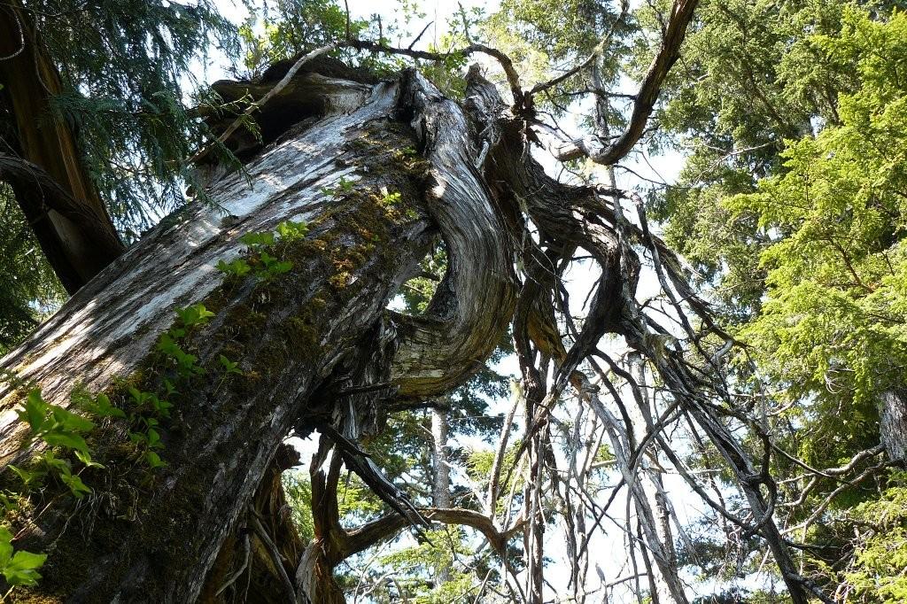 Impressionen vom borealen Waldbestand auf dem Mt. Hays