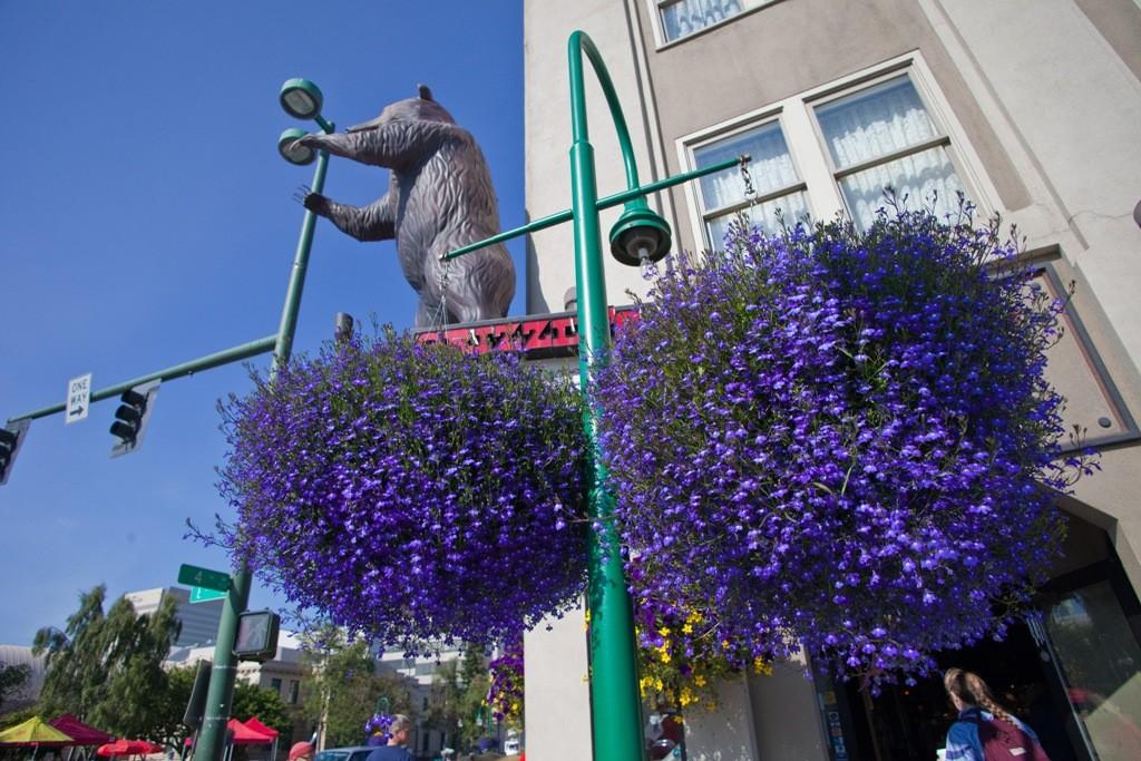 """Blumenpracht und """"Markenzeichen"""" der Alaskaregion!"""