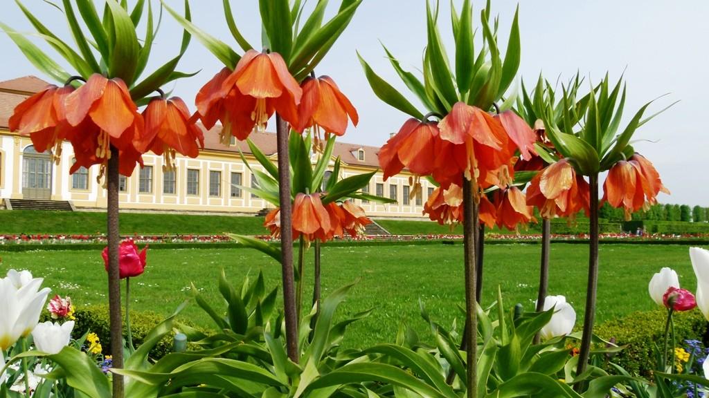Blütenzauber vor dem Galeriegebäude