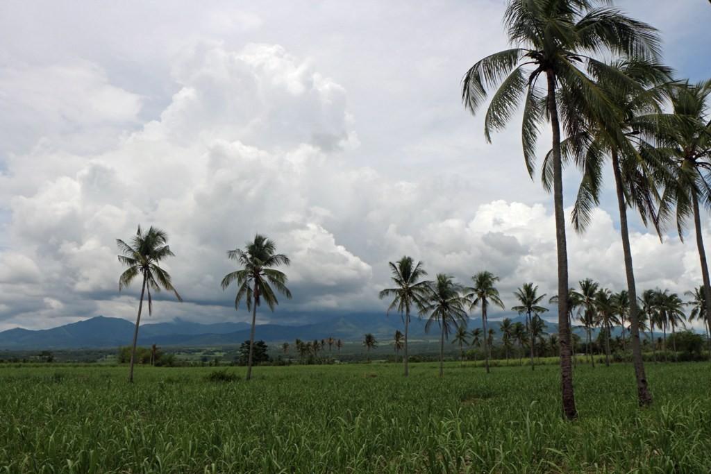 Linker Hand in Fahrtrichtung sind die Ausläufer der bis zu 1500 m hohen Cuernos de Negros zu erkennen