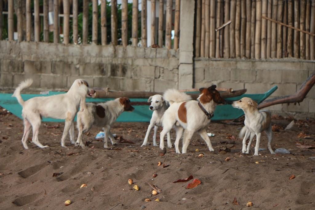 ...streunende Hund gehören hier zum Strandleben!