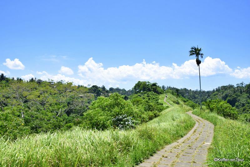 Campuhan Ridge Walk, Ubud, Wanderweg, Bali