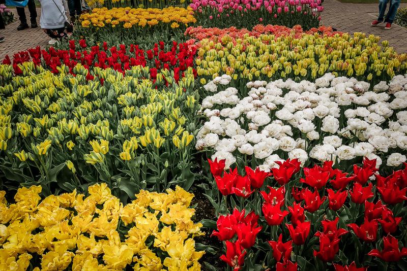 Keukenhof, Amsterdam, Tulpen, Blumen, Gärten, Tulpenblüte
