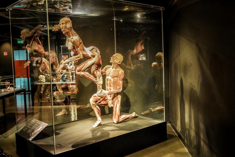 Körperwelten in Amsterdam, Show, Museum