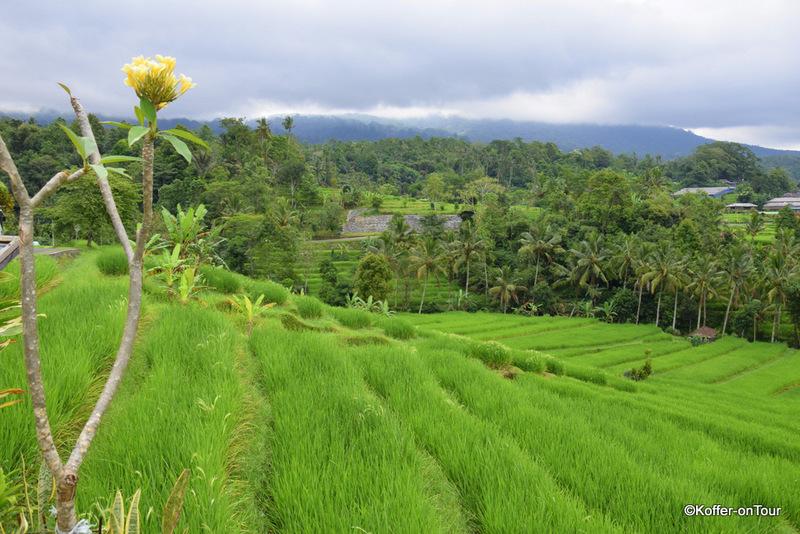 Jatiluwih Reisterassen, Reisfelder, Bali,Vulkan