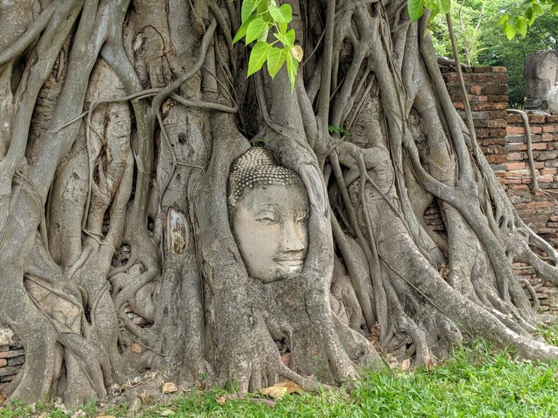 Ayutthaya, Thailand, Schönste Orte Thailand, Bäume, Tempel