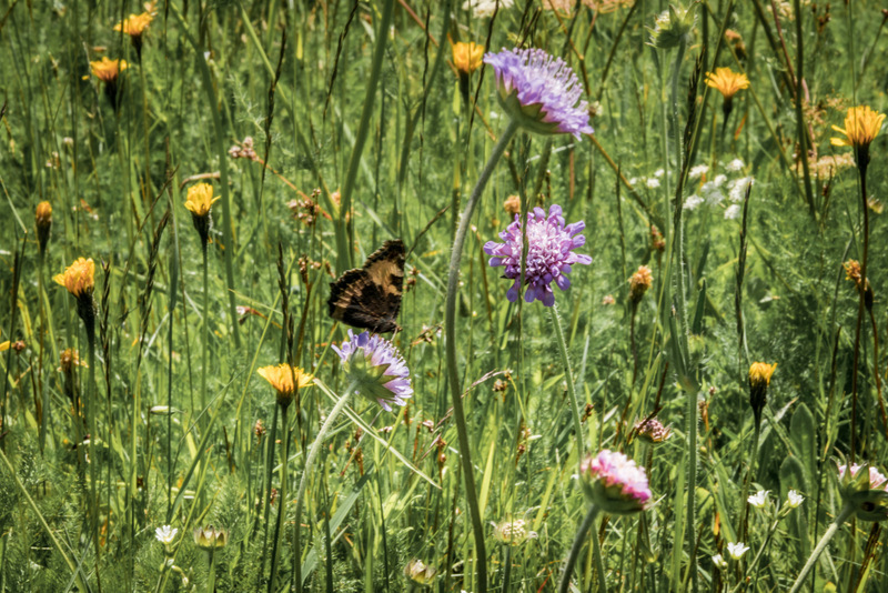Geißenpfad, Schwarzwald, Black Forrest, Deutschland