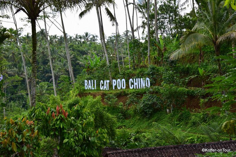 Gewürzfarm, Bali, Kaffee Katze