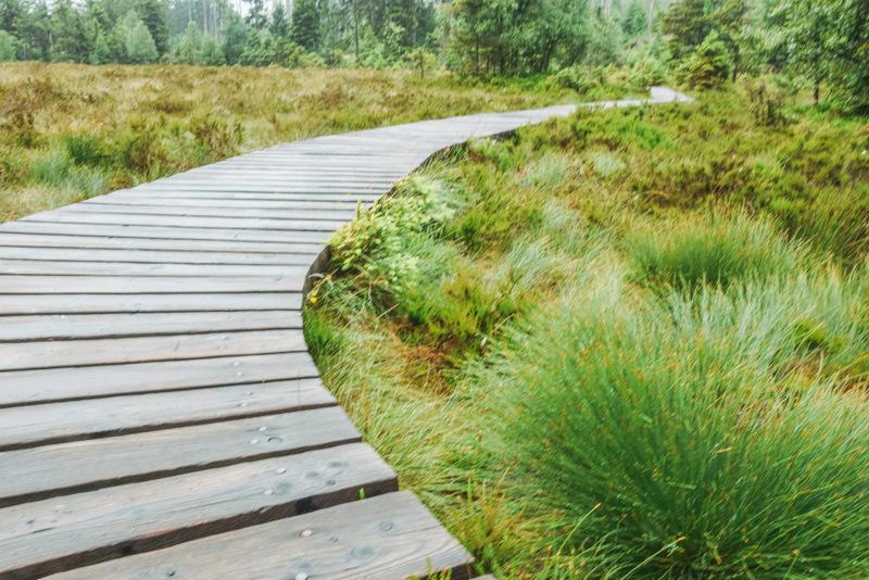 Torfhausmoor, Wanderung, Moor, Broken, Urlaub in Deutschland, Harz