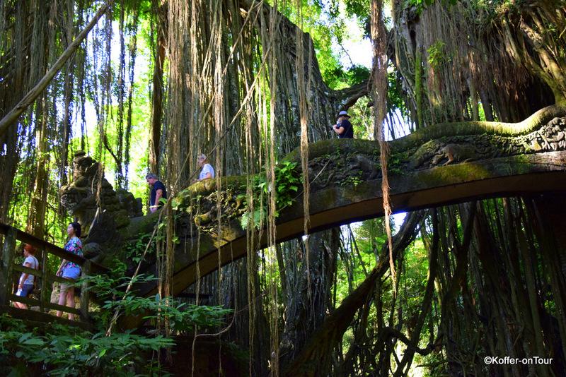 Monkey Forrest, Affenpark, Ubud, Bali, Affen