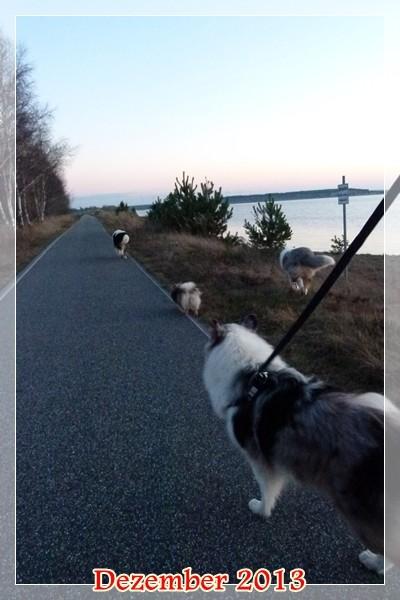 Spaziergang mit Spitz