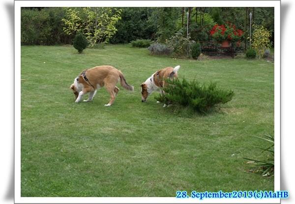 Gartenerkundung