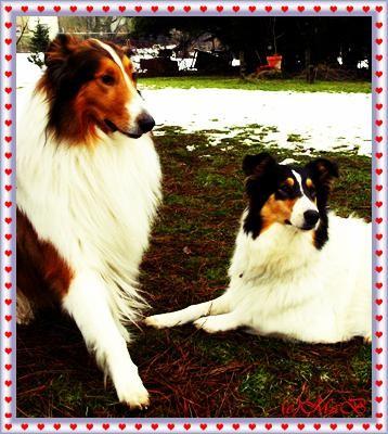 V: Fox Lions Eric / M: Darling White Lady v. Gräfensteiner Land