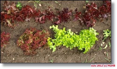 Die Salatbar ist eröffnet :)