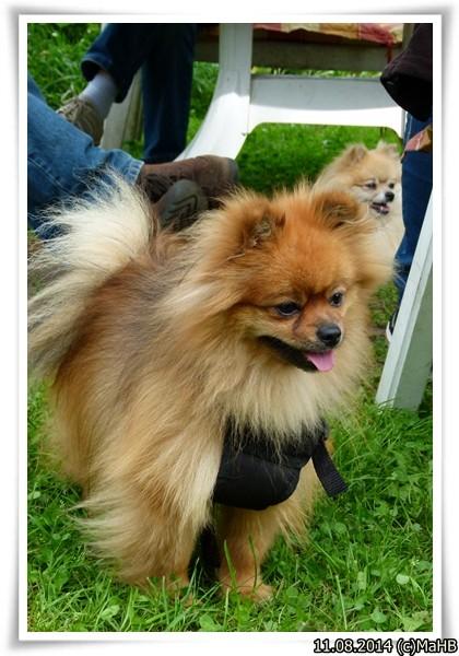 Esmeraldas Elvis- in Ausbildung zum Therapiehund!