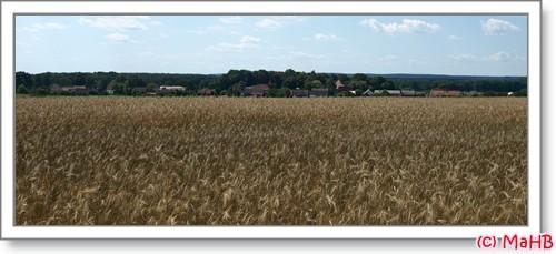 Blauer Himmel, Getreidefelder, Wald- was will man mehr ???????