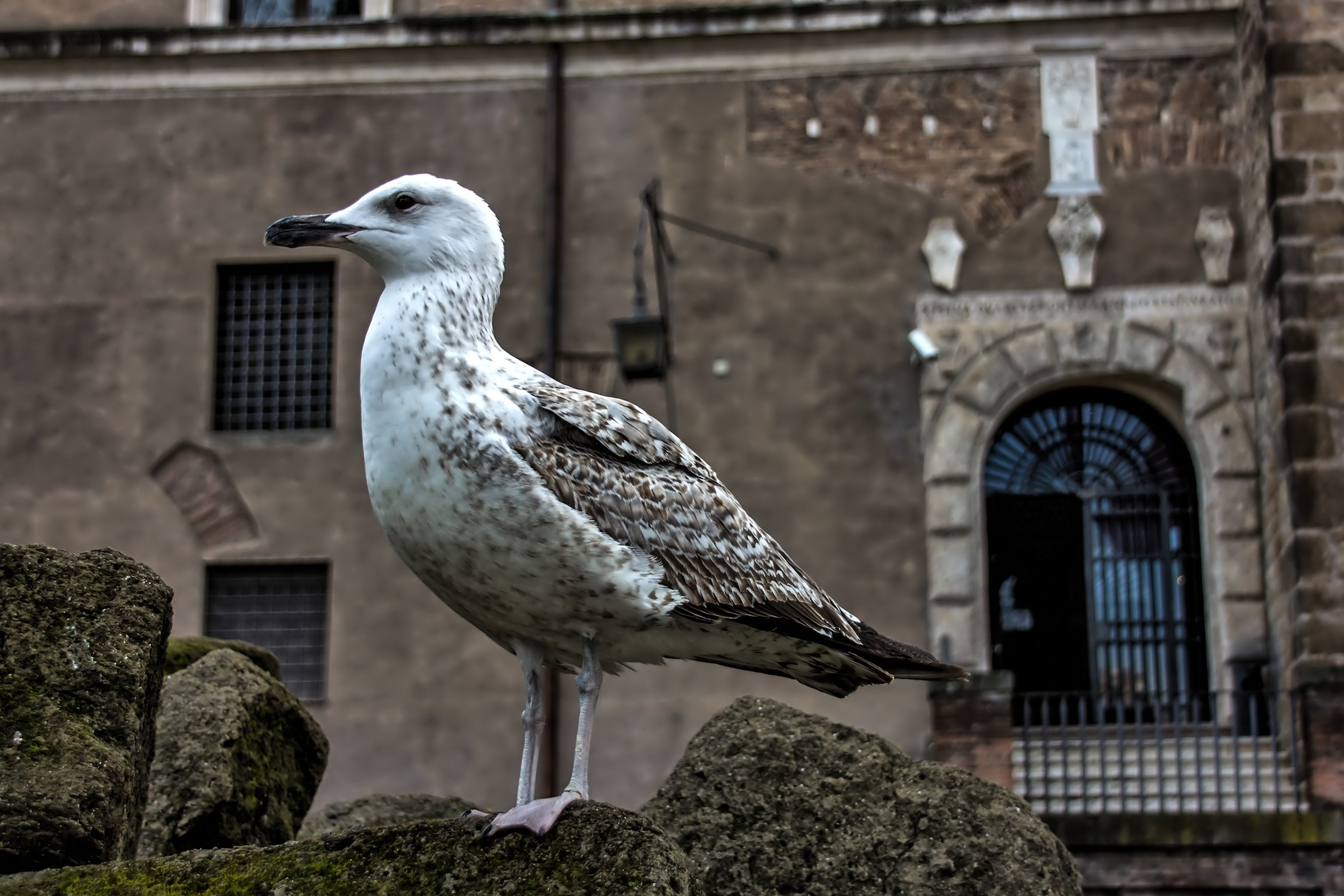 12_Möwe in Rom.