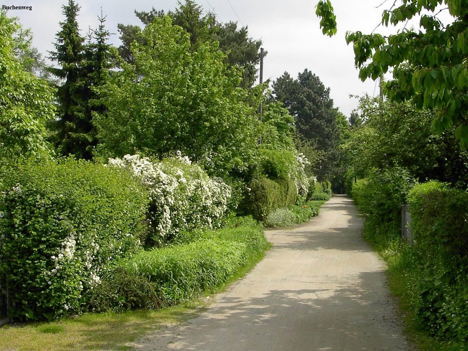 Buchenweg aus der Altanlage in Richtung Geteteich Mai 2011