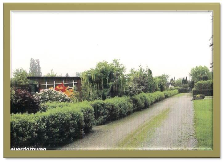 Feuerdornweg 2004