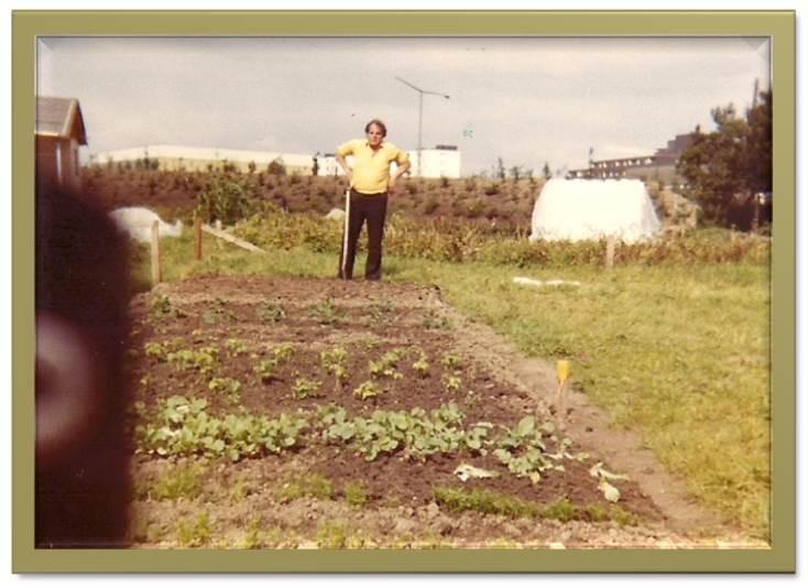 Erste Anpflanzung im Ergebnis 1979