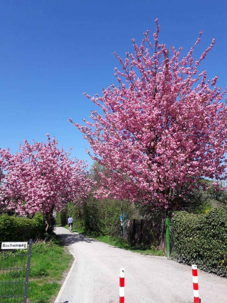 Buchenweg in der Altanlage April 2018 in Richtung City