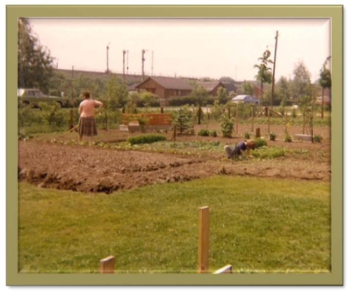 Erste Anpflanzungen 1979