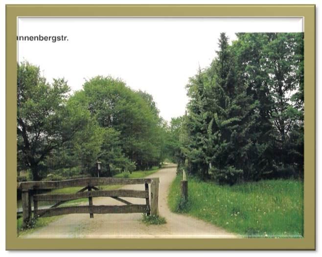 Tannenbergstraße Sommer 2004