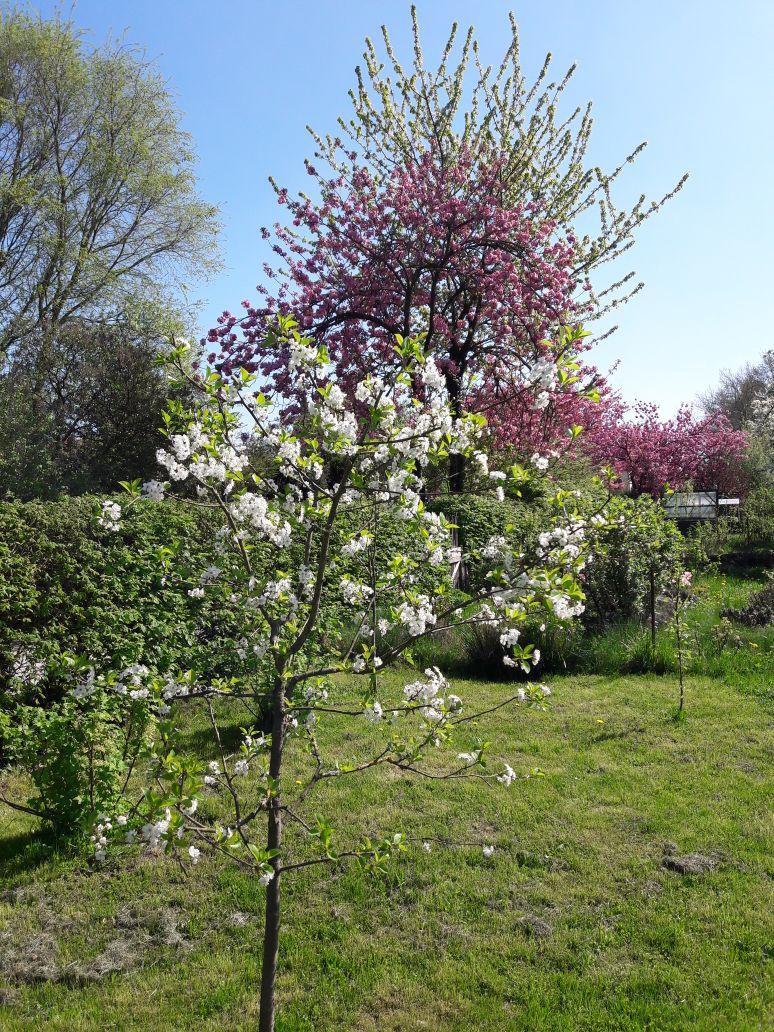 Kleingarten am Eichenweg in der Altanlage April 2018