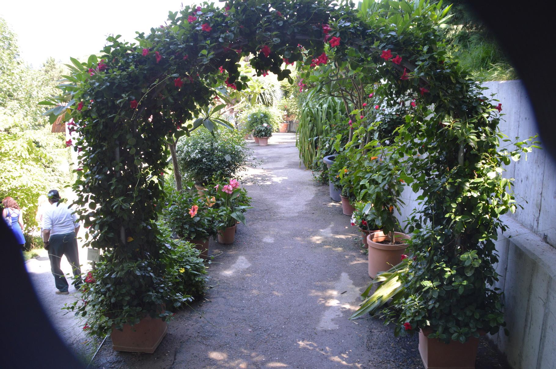 Blumen im Garten (Schloss)