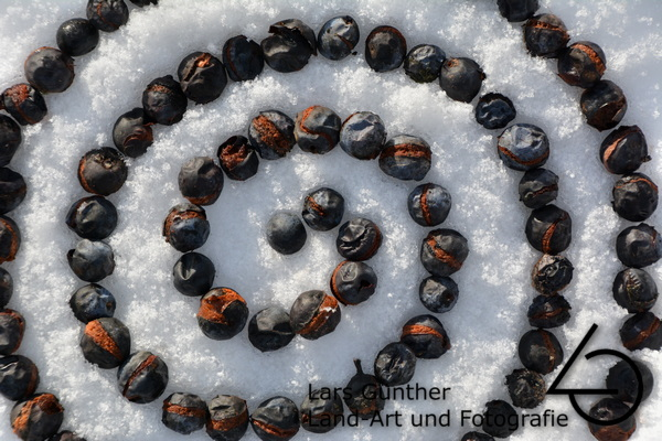 Januar 2021 - Schlehen auf Schnee - Eichstätt Frauenberg