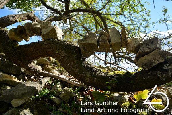 Kalksteine auf Baum - Eichstätt Spindeltal