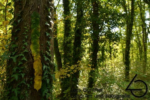 Blätter an einem Baum geheftet - Eichstätt Lämmertal