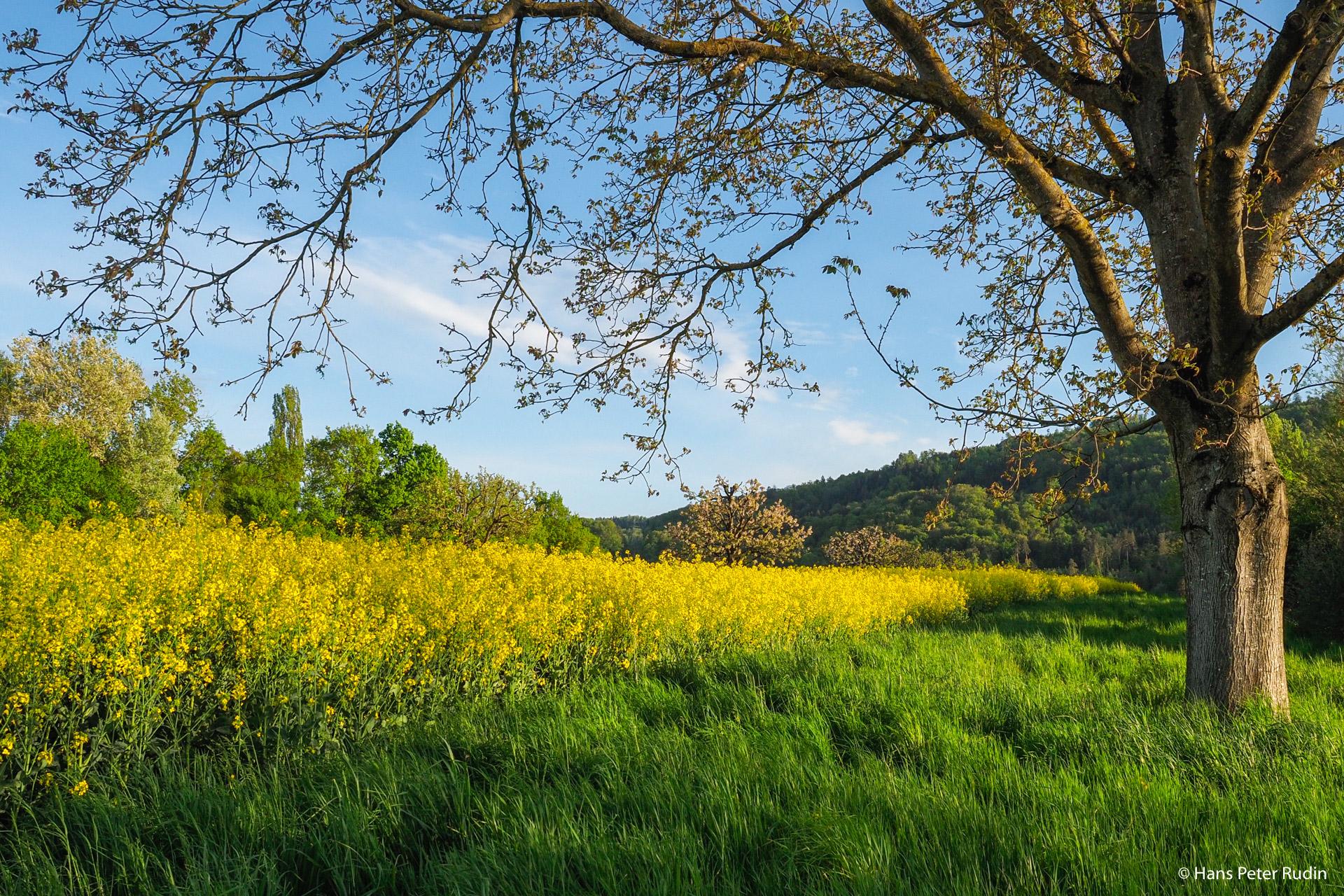 Frühling in Ettingen