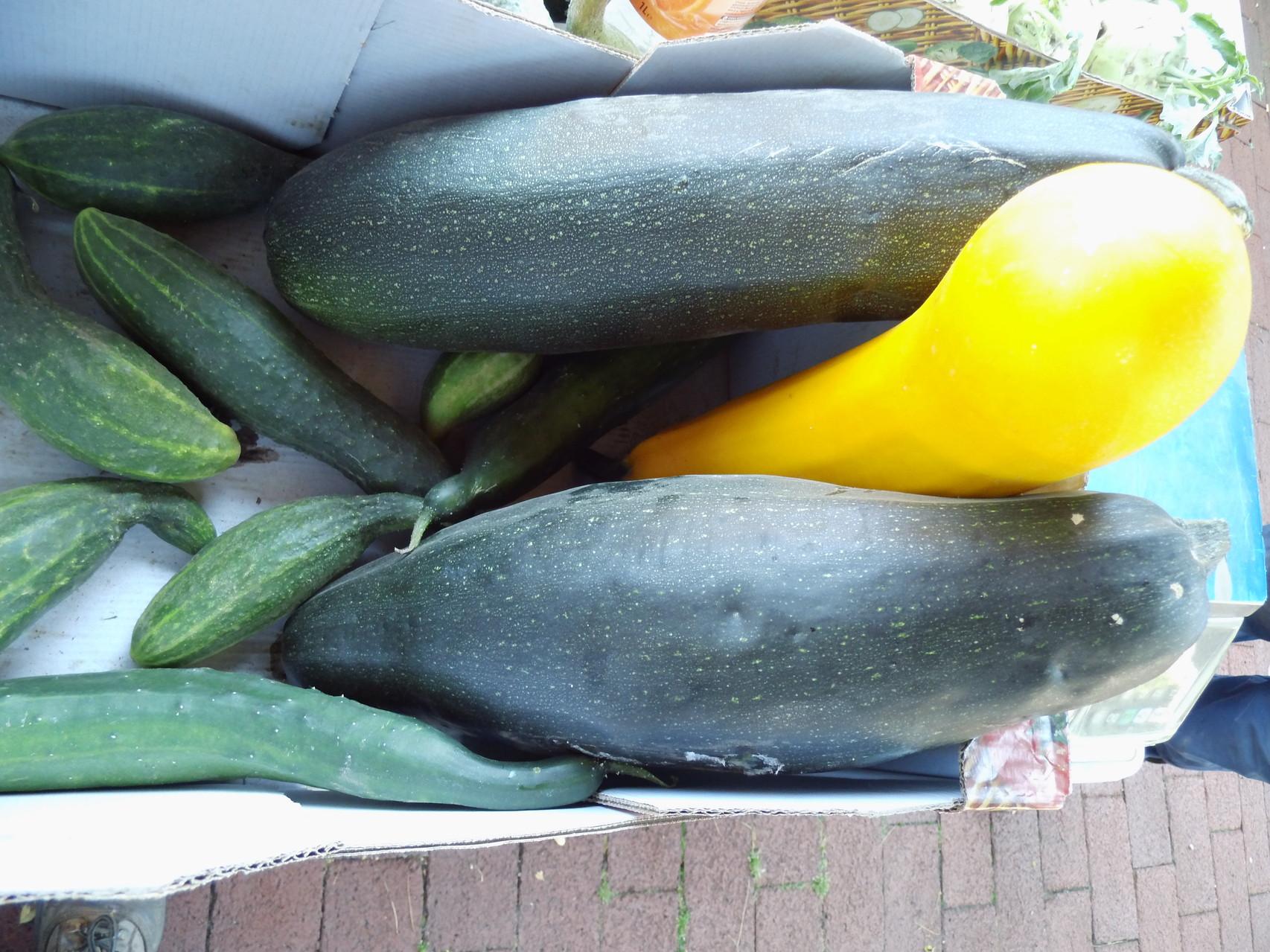 eigene Zucchini u. Gurken