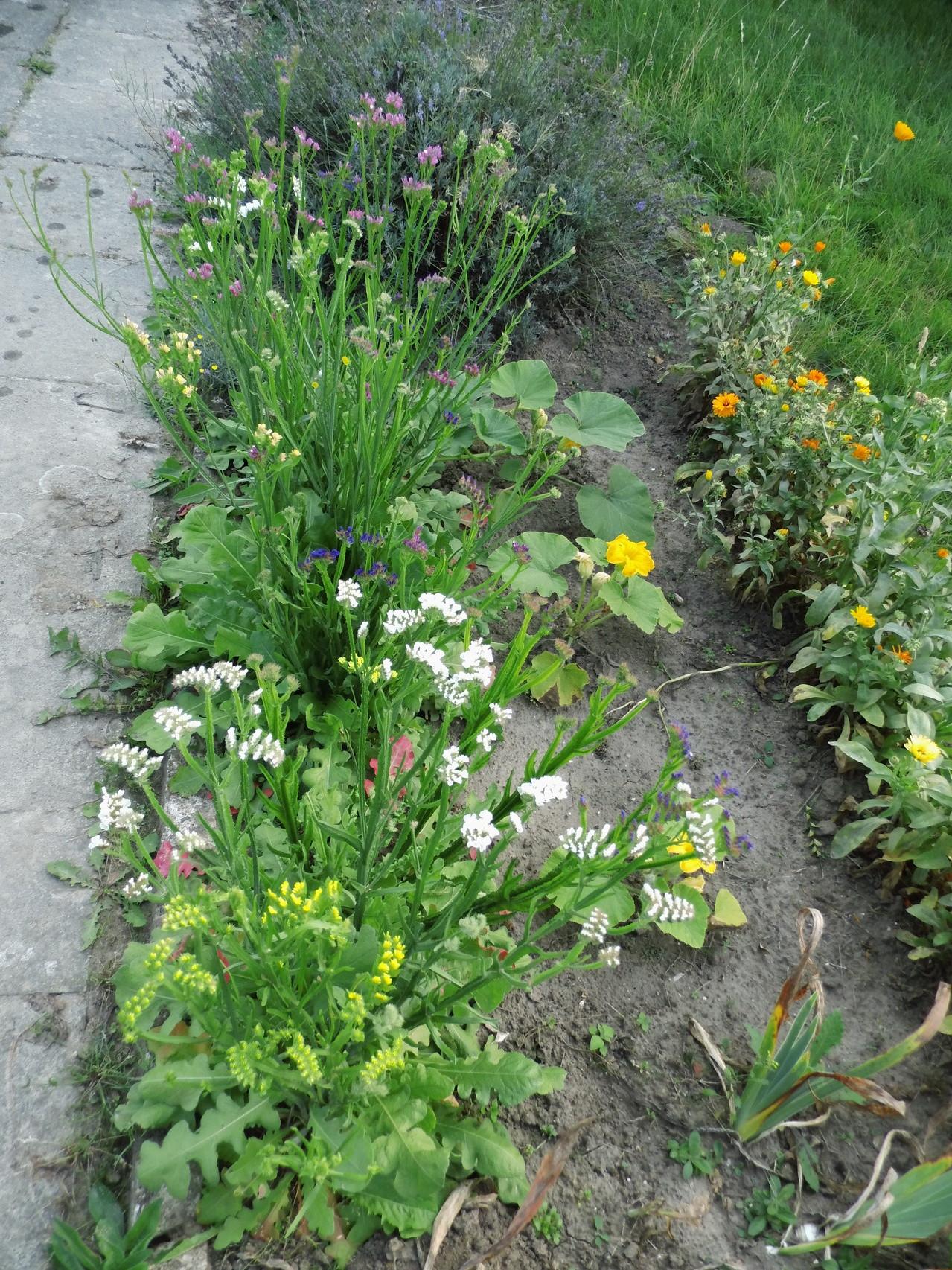eigener Blumenanbau