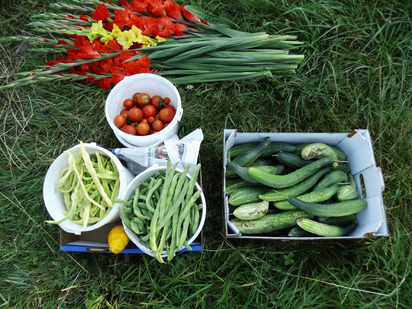 Bohnen, Tomaten, Gurken frisch gepflückt