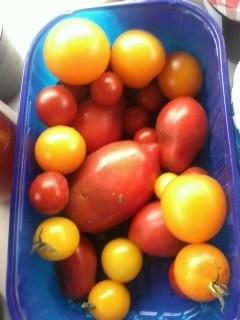 frische gelbe u. rote Tomaten