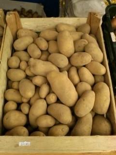 Kartoffel - Nicola - festkochend