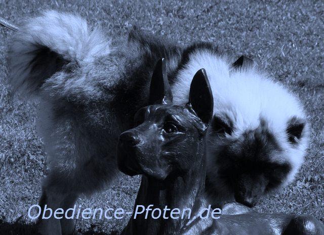 Zugehen auf anderen Hund