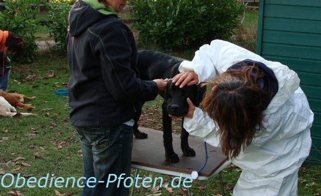 Tierarztübungen: nicht nur im Welpenalter