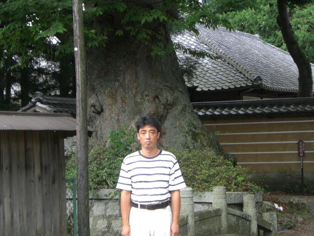 真宗寺の神木