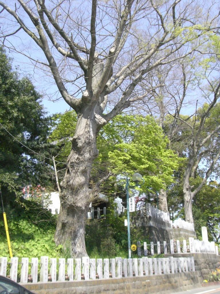 布施弁天の神木