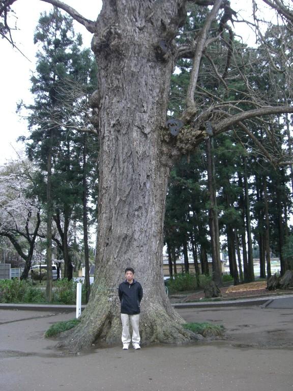 国宝六地蔵の神木で採気
