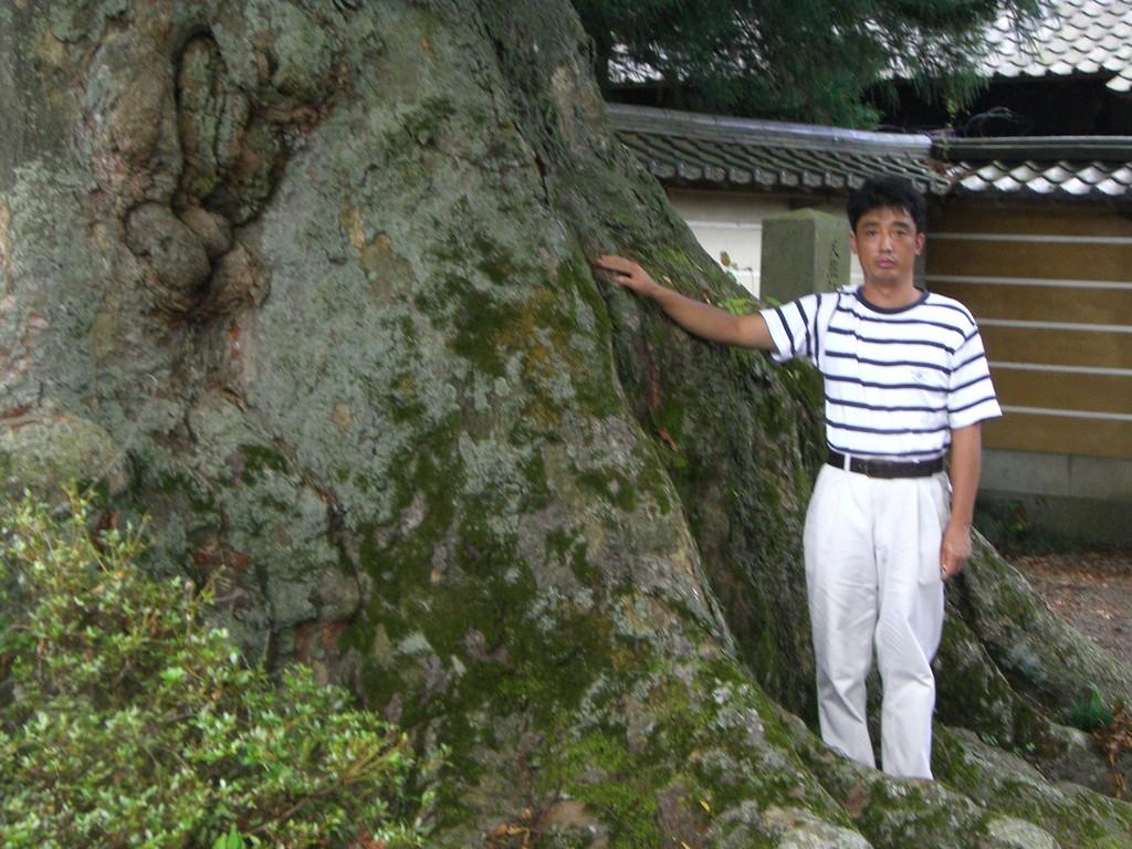 真宗寺の神木から採気