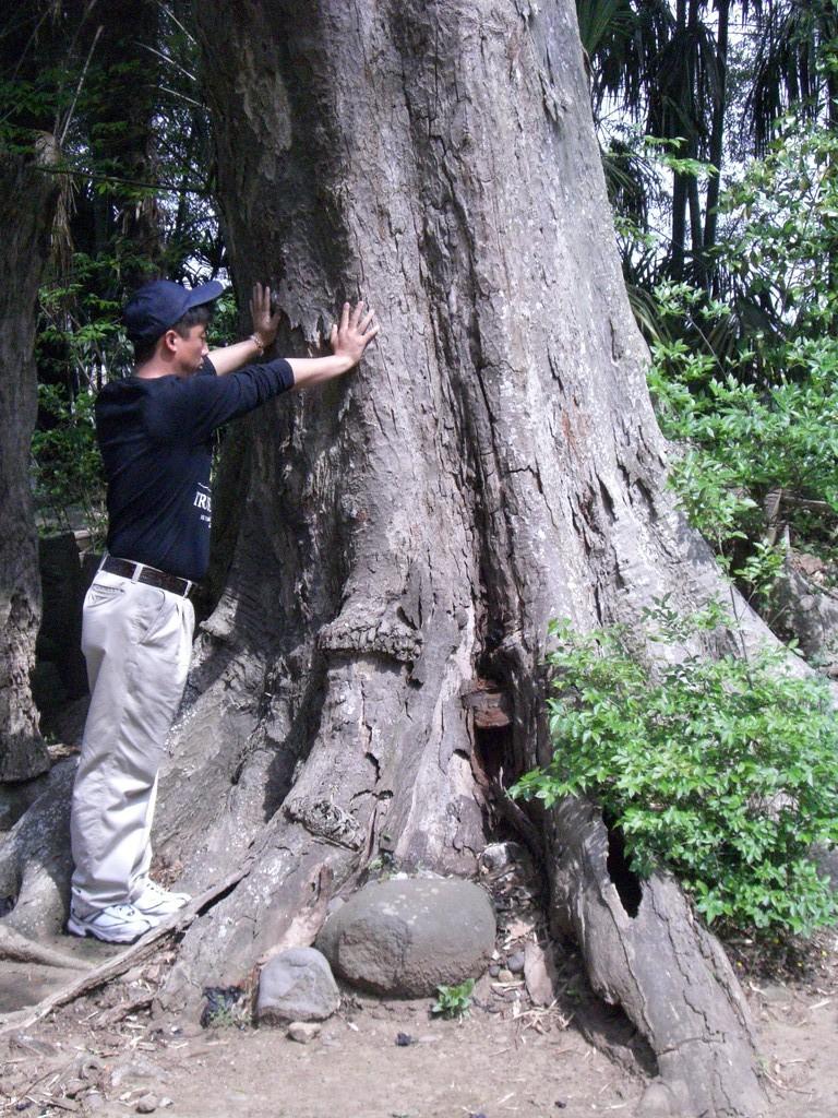 神木採気不動尊大樹