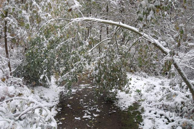 Schneebruch in der Strecke....